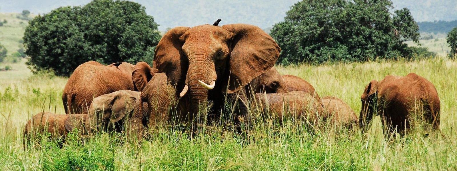 Tanzania Safaris Tours