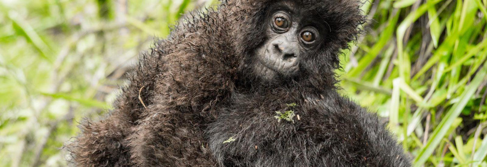 10 Days Rwanda Classic Safari
