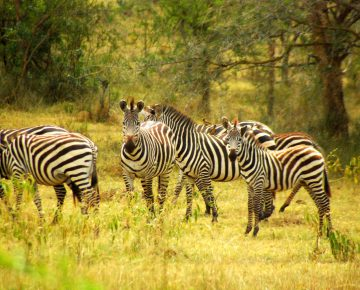 14 Days Uganda Vacation Holiday