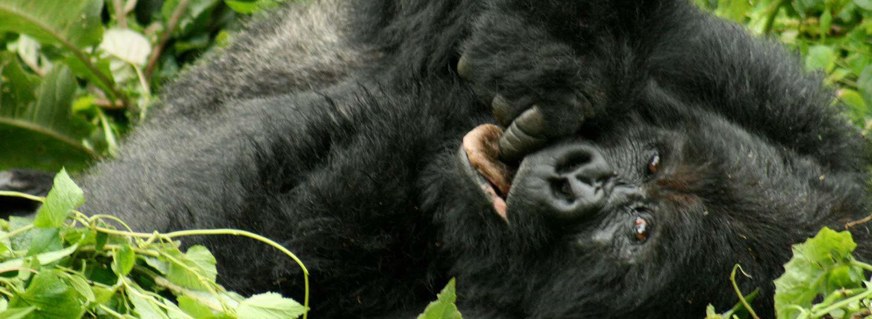 21 Days Grand Uganda Budget Safari