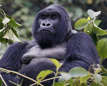 4 Days Double Gorilla Trekking Rwanda