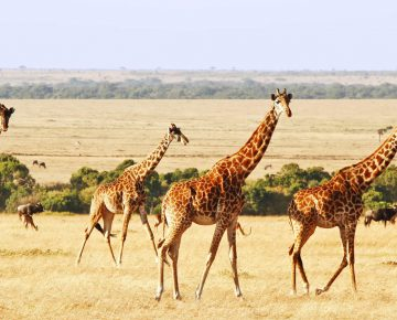 5 Days Kenya Wildlife Safari