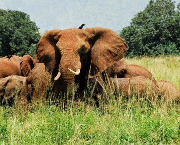 6 Days Uganda Big 5 Game Safari
