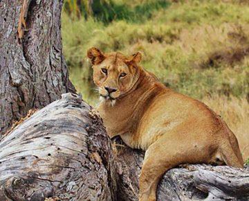7 Days Epic Tanzania Wildlife Safari