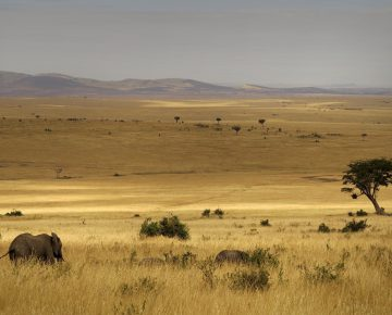 8 Days Masai Mara & Amboseli Safari