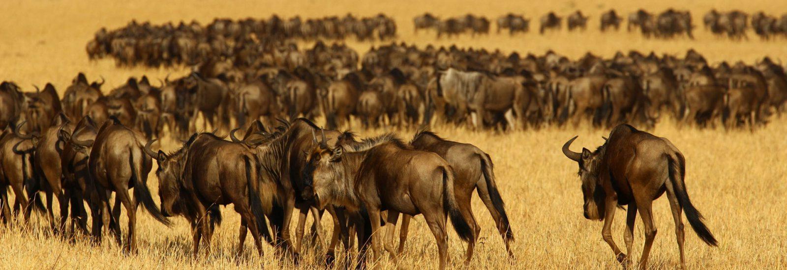 9 Days North Tanzania Epic Wildlife Safari