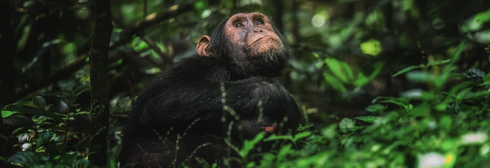 9 Days Wildlife & Primates